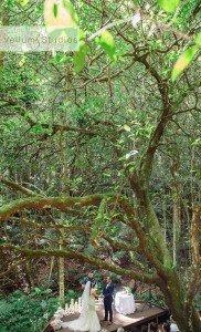 OReillys_Rainforest_Retreat_Wedding-21