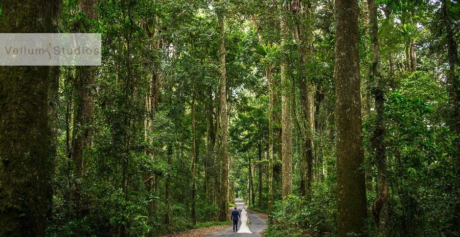 OReillys_Rainforest_Retreat_Wedding-32