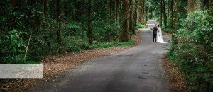 OReillys_Rainforest_Retreat_Wedding-33