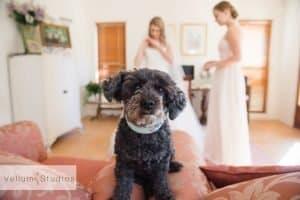 Braeside_Chapel_Wedding_Photographer-15
