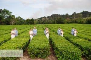 madura_tea_estate_byron_wedding-46